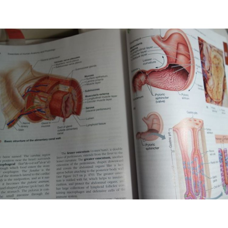 Essentials Of Human Anatomy And Physiology E Marieb